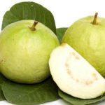 امرود اور اس کے اہم فوائد