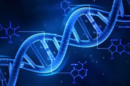 What is a DNA test