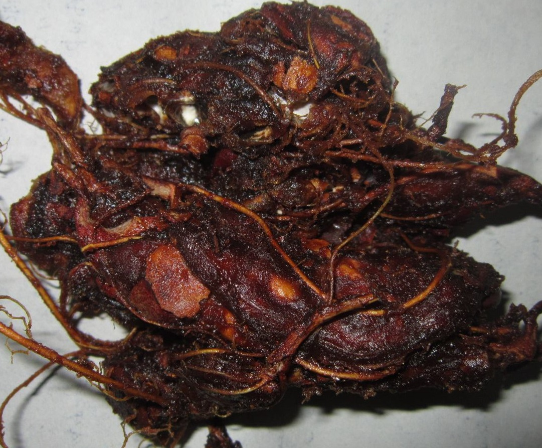 Imli or Tamarind Benifits in Urdu Hindi