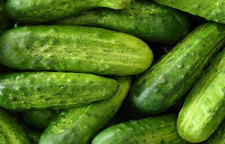 Cucumber or Kheera and its benifits in Urdu Hindi