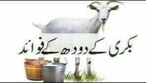 The benefits of Goat's Milk